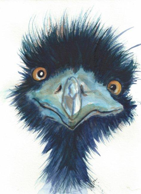 blue emu.jpg