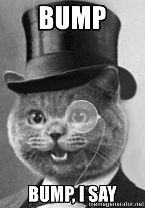 bump cat.jpg
