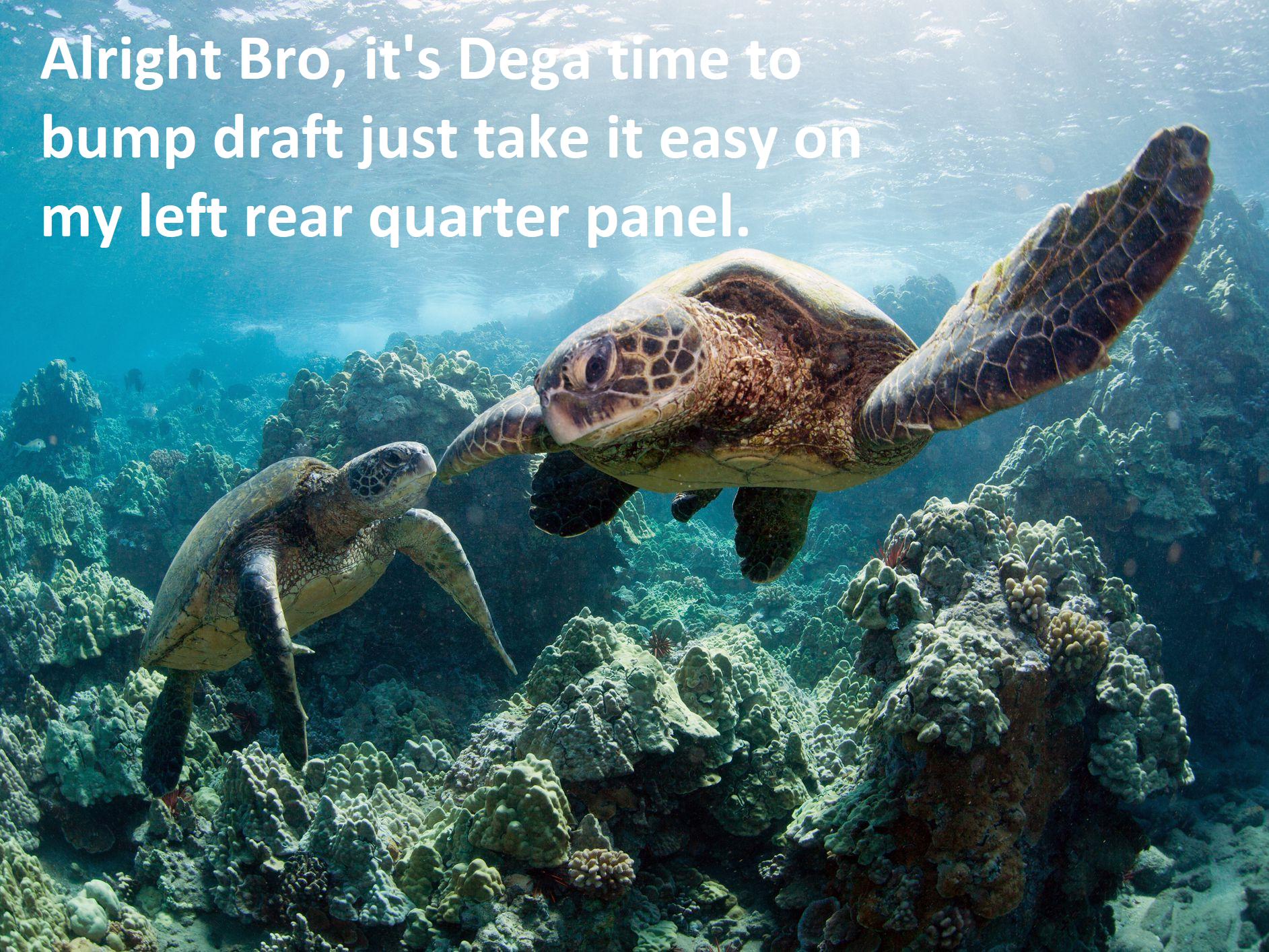 Dega bump draft Turtles.png