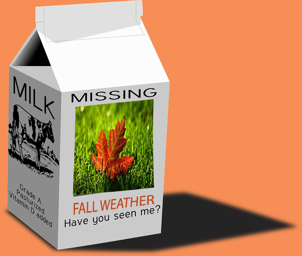 FallMissing.jpg