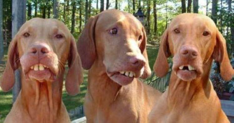 hillbilly dogs.jpg