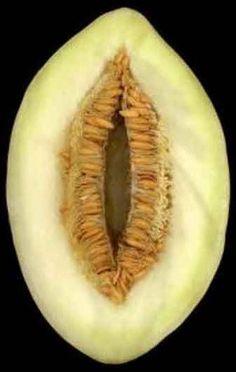 melon exhibit .jpg