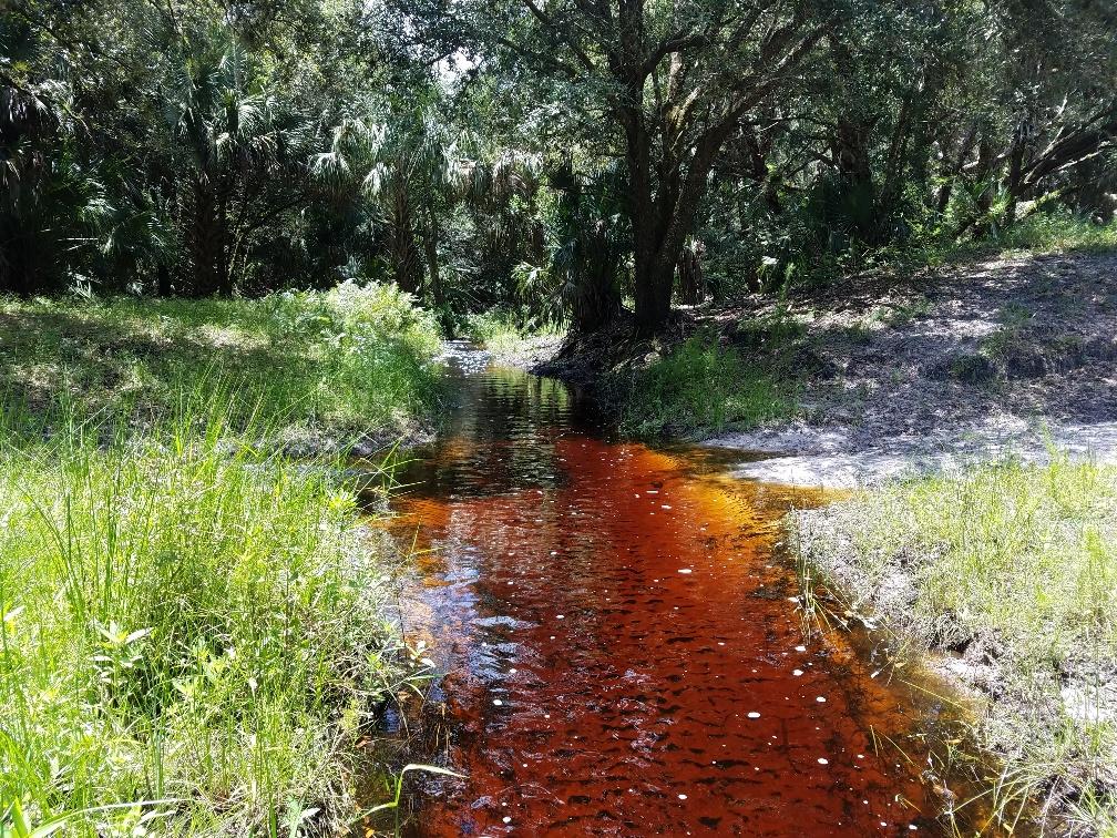 Red water creek 7-28-18.jpg